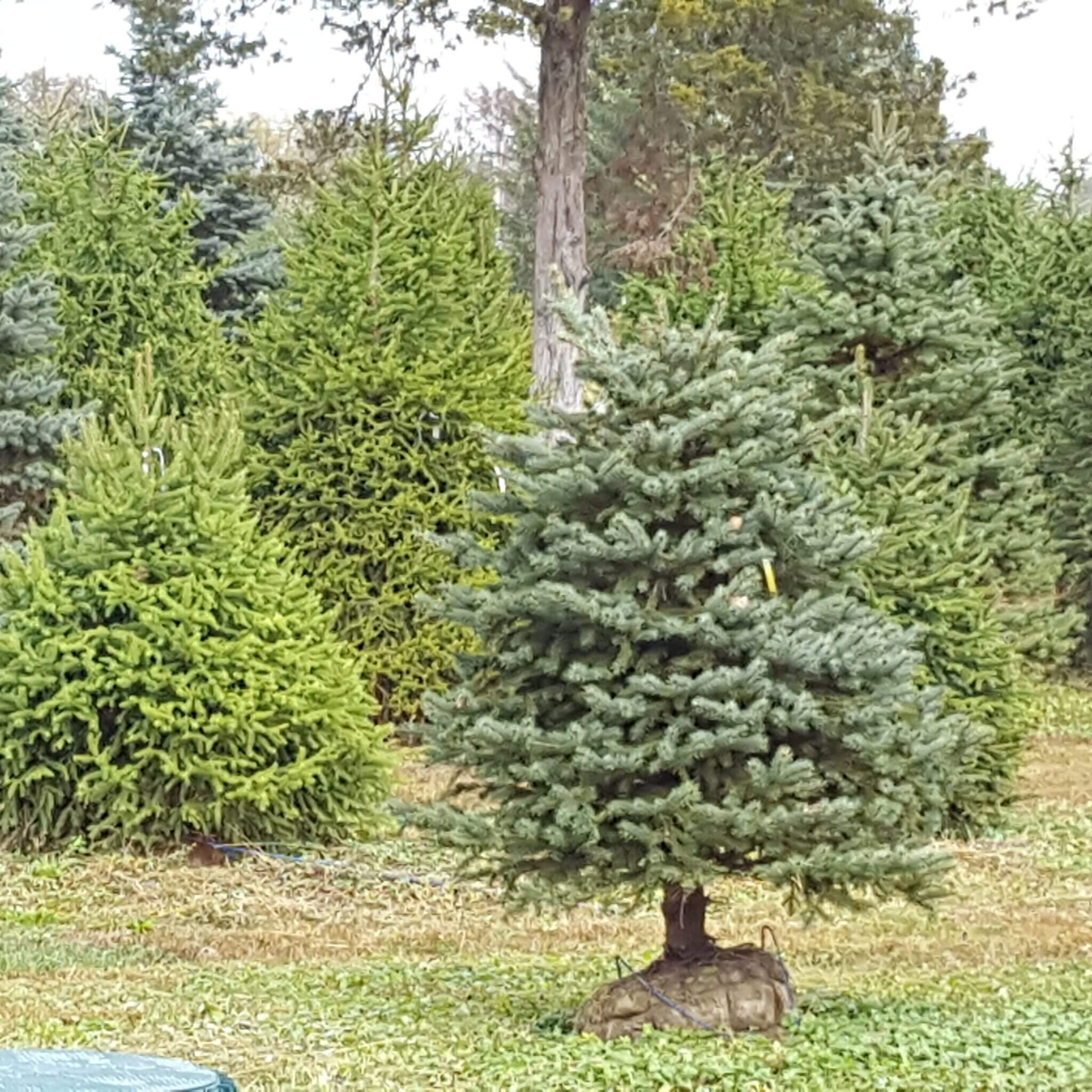 Landscaping Trees Regina : Regina farms garden center landscaping and supplies