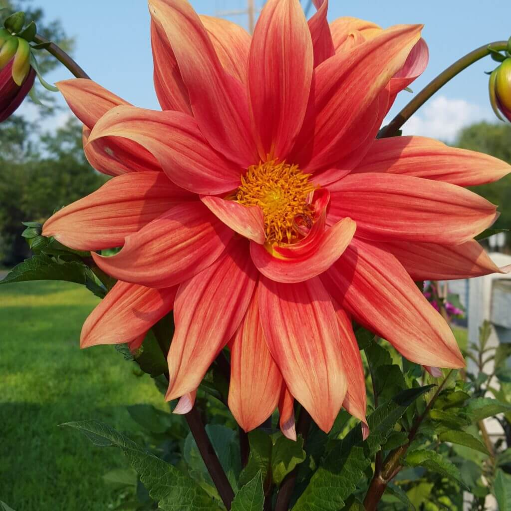 Pictures - Regina Farms Garden Center - Landscaping and ...