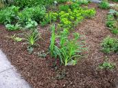 Garden Quantity Estimator